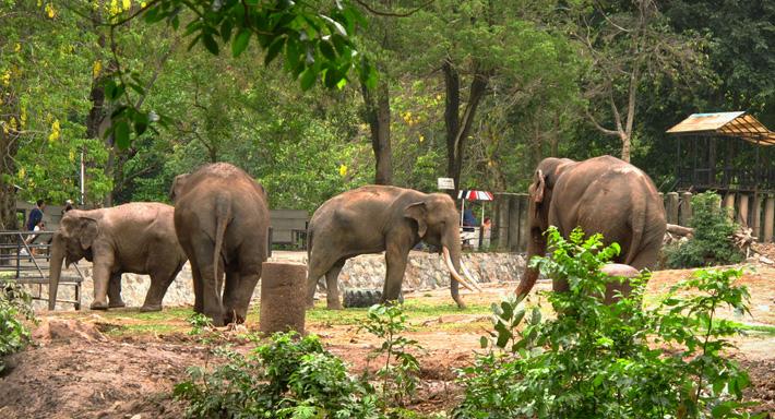 Экскурсия зоопарк Кхао Кхео в Таиланде, Паттайя - слоны