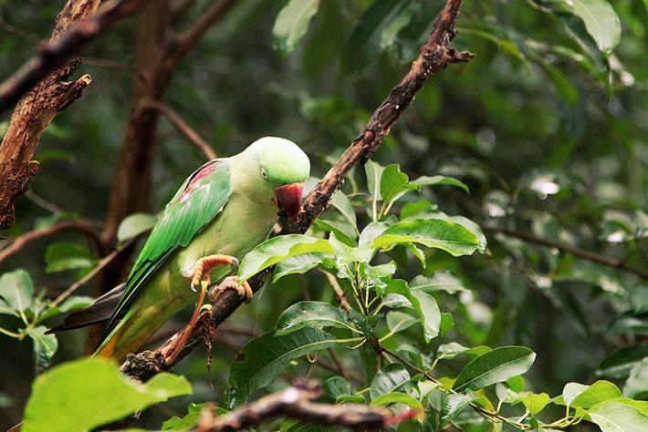 Экскурсия в зоопарк Кхао Кхео в Таиланде - какаду