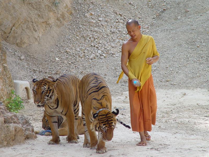 Храм Тигров Тайланд