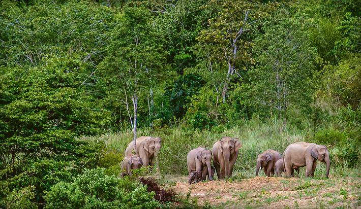 Национальный парк слонов в Таиланде