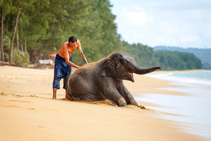 Слон - священное животное и символ Таиланда