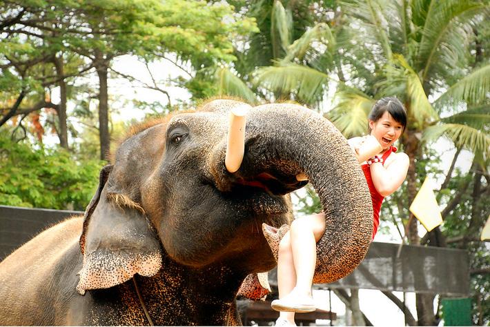 Слон - священное животное и символ Тайланда