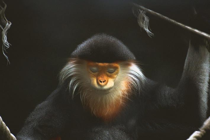 Открытый зоопарк Кхао Кхео в Таиланде, Паттайя - обезьяна