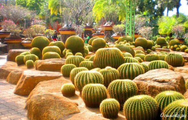 Тропический парк сад Нонг Нуч - Кактусы