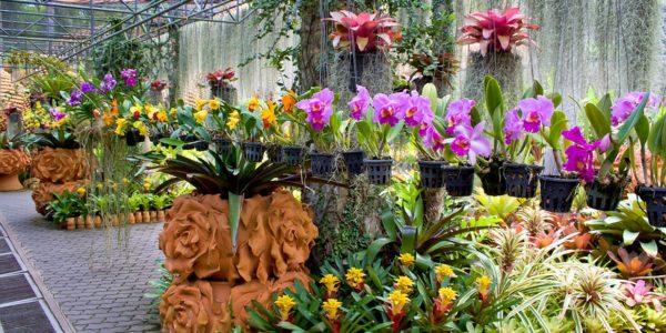 Тропический парк сад Нонг Нуч — Орхидеи