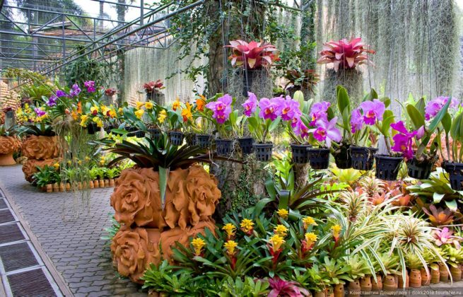 Тропический парк сад Нонг Нуч - Орхидеи